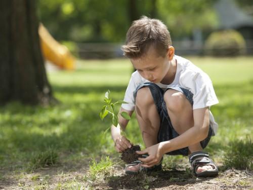 Ein Baum für jedes Kind