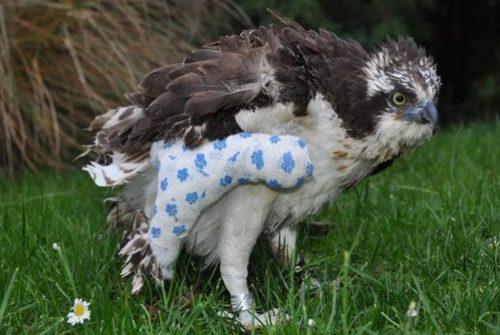 Auffangstation für verletzte Greifvögel und Eulen