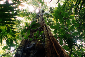 Urwald schützen – Umwelt sichern
