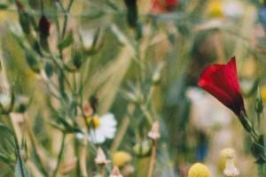 Blühflächen als Wohnraum für heimische Tiere