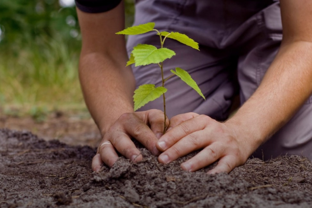 Fight against climate change through afforestation