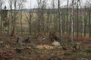 Waldaktionswoche – Klimawandelwald pflanzen