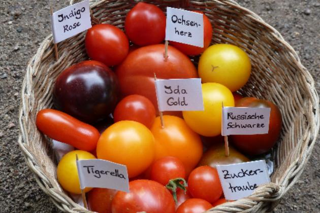 Kulturpflanzenvielfalt mit Tausch und Talk erhalten