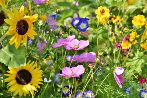 Blumenweide Birkenheide