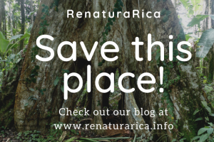 renaturaRica - Saving a natural paradise from destruction