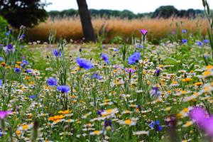 Umwandlung von Agrarflächen zu Blühwiesen