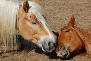 Natur entdecken – Tiere erleben – Tiergestützte Therapie für Kinder