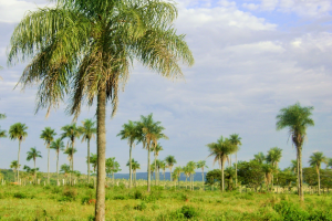 Ökoprojekt – Grüne Oase Paraguay