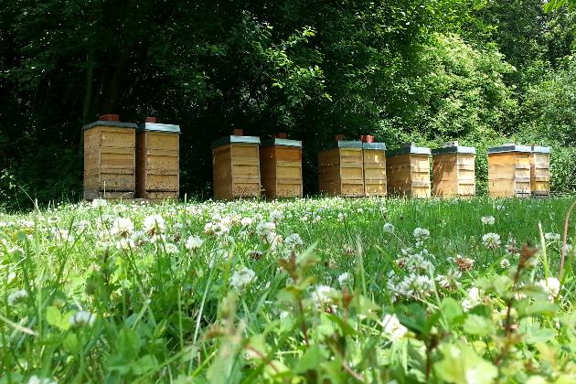 Ein Garten Eden für Biene, Natur und Mensch