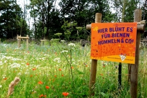 Bienen aufs Land
